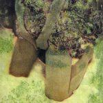 小林美佐子「花嵐」2017年 銅版画、リトグラフ、手彩色 34×26.5cm 額装
